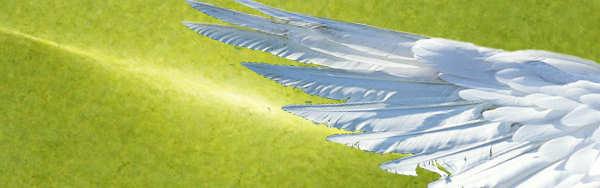 Flügel des Allwissens